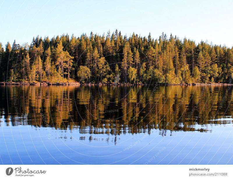Die Bäume des Nordens Natur Wasser Sommer Freude Ferien & Urlaub & Reisen Wald Erholung Leben Herbst Freiheit Landschaft Umwelt Glück Frühling Wärme Küste