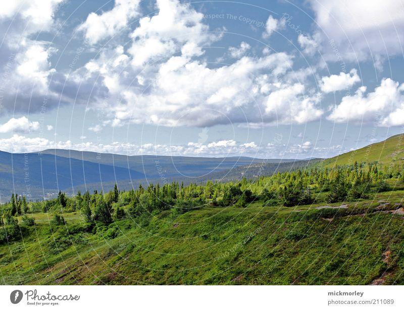Die Landschaft Norwegens Himmel Natur Ferien & Urlaub & Reisen Sommer Baum Erholung ruhig Wolken Ferne Wald Berge u. Gebirge Umwelt Leben Wiese Freiheit