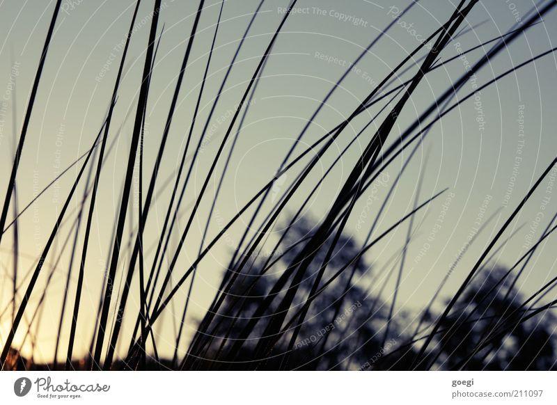 Sommerabend Natur Himmel Baum Pflanze Ferien & Urlaub & Reisen Gras Horizont ästhetisch Freizeit & Hobby Warmherzigkeit Idylle Grasland Farbverlauf Wolkenloser Himmel Grasspitze