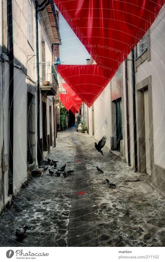 travessa weiß rot schwarz Haus Wege & Pfade Stein Stimmung Dekoration & Verzierung Gasse Taube verschönern Schwarm Kleinstadt Dreieck Vogel Umwelt