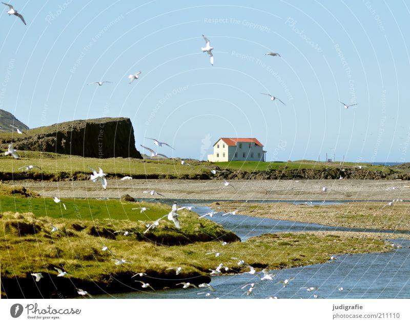 Island Natur Wasser Pflanze Tier Haus Wiese Umwelt Freiheit Landschaft Gebäude Stimmung Vogel fliegen Felsen natürlich Klima
