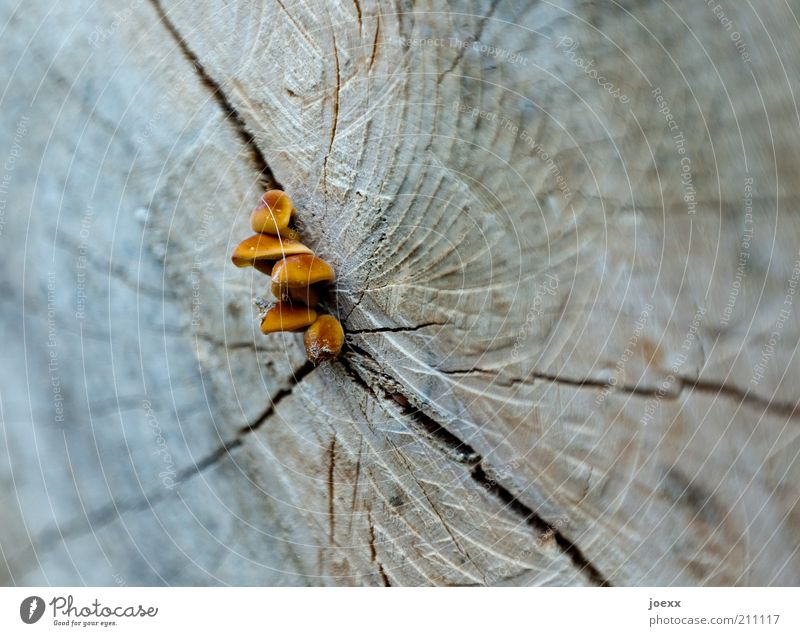 Destruent Baum blau Leben Holz braun Hoffnung Wandel & Veränderung Verfall Pilz Baumstamm