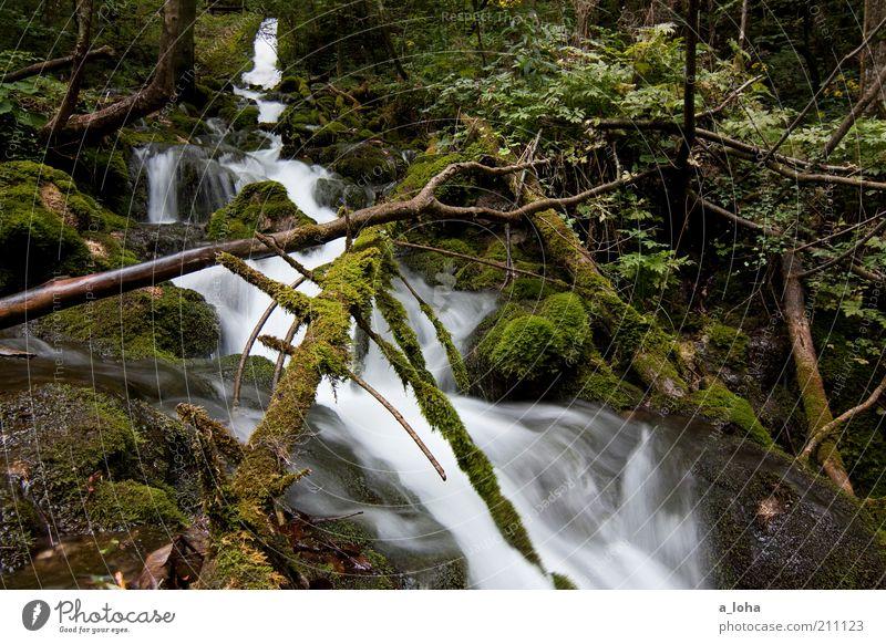 nature 3.3 Natur Urelemente Luft Wasser Pflanze Baum Moos Wald Felsen Alpen Berge u. Gebirge Flussufer Bach Wasserfall Linie Tropfen Bewegung glänzend Wachstum