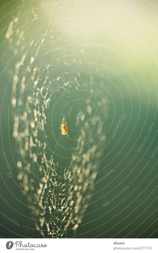 Spiders In The Dressing Room Natur Tier Umwelt hängen Spinne krabbeln Spinnennetz Netz Unschärfe