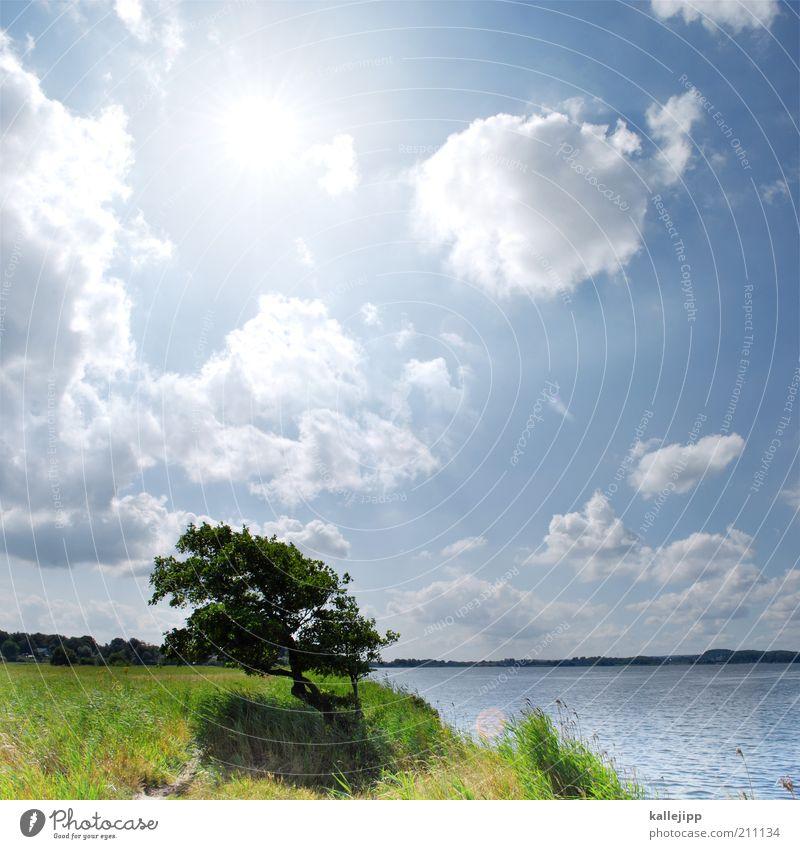einmal tief luft holen Natur Wasser Himmel Baum Sonne Sommer Ferien & Urlaub & Reisen Wolken Ferne Freiheit See Landschaft Luft Küste Wellen Umwelt