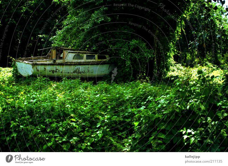 arche noah Umwelt Natur Pflanze Grünpflanze Wildpflanze Schifffahrt Bootsfahrt Sportboot Jacht Segelboot Jachthafen außergewöhnlich Urwald verfallen alt Baum