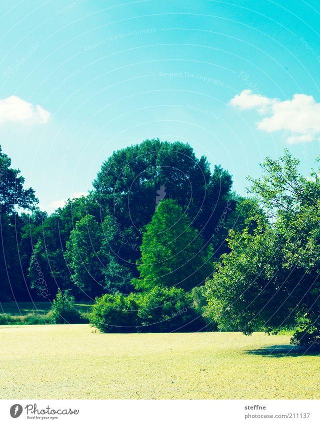 Gelbe Grütze Umwelt Natur Landschaft Pflanze Himmel Wolken Schönes Wetter Baum Teich Idylle Wasserlinsen Farbfoto mehrfarbig Außenaufnahme Tag Menschenleer