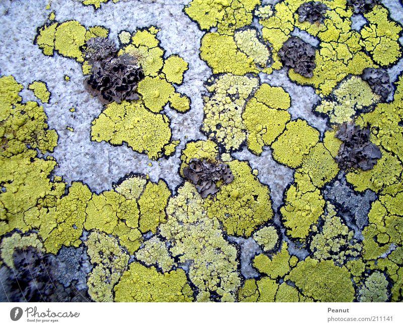 :small world: Natur alt grün Pflanze gelb Farbe grau Stein klein Felsen Ordnung natürlich außergewöhnlich fest Moos Fleck