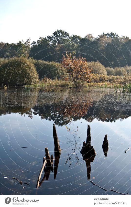 Neulich im Moor Umwelt Natur Landschaft Pflanze Urelemente Wasser Baum Gras Sträucher Wildpflanze Sumpf ruhig Farbfoto Außenaufnahme Menschenleer Tag