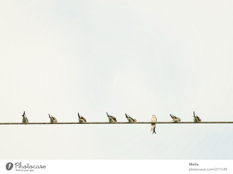 Dagegen Natur Himmel Linie hell Zusammensein Vogel klein Umwelt frei sitzen Ordnung Elektrizität Energie Tiergruppe Kabel natürlich