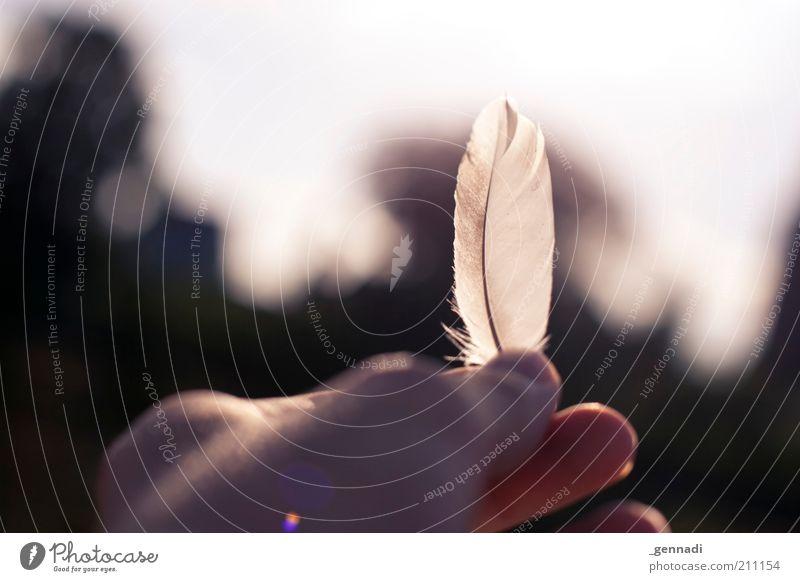 From the birds Hand Feder Blick Leichtigkeit leicht blenden Finger Außenaufnahme Menschenleer Textfreiraum oben Tag Silhouette Sonnenlicht Gegenlicht