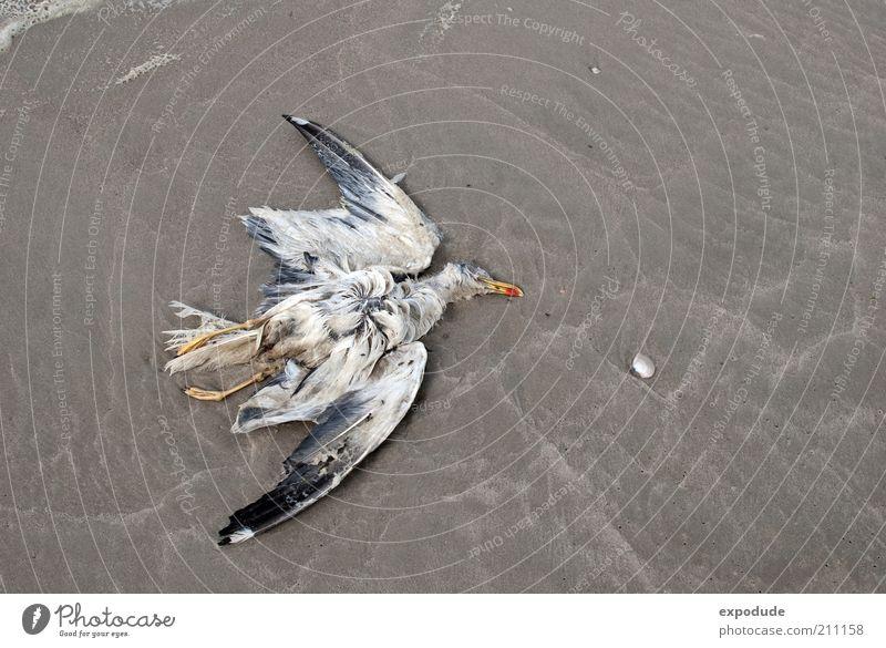 Tote Möwe Tier Tod Vogel Umwelt Erde Wildtier Möwe Totes Tier