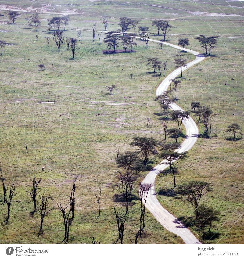 Safaripark Natur Baum grün ruhig Straße Gras Wege & Pfade Landschaft Aussicht Afrika Steppe Nationalpark Kenia Überblick