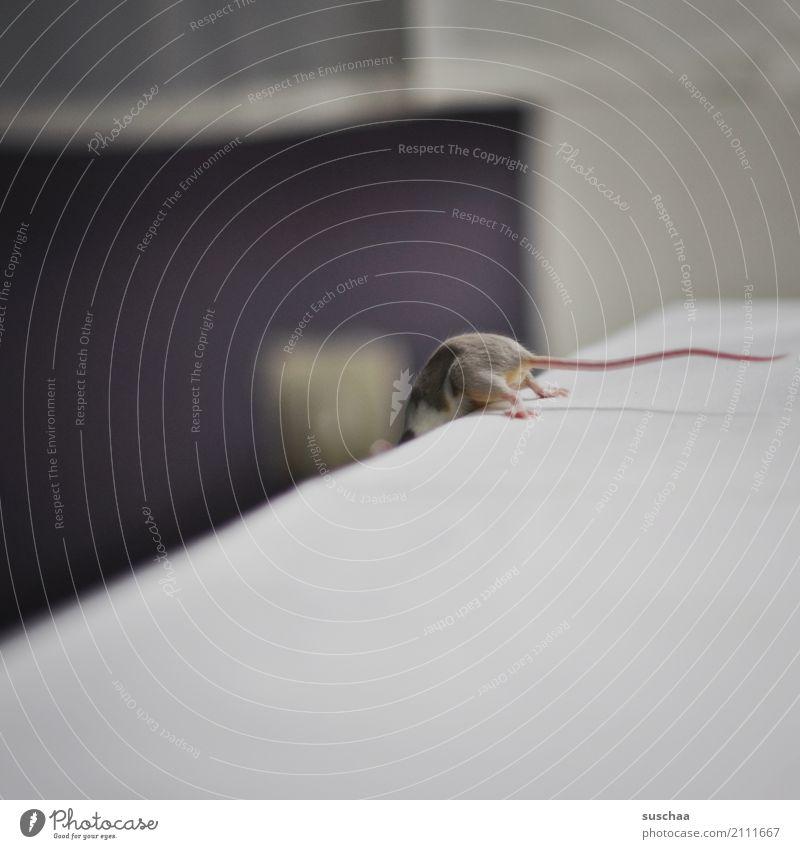 mäusestunt Maus Haustier kleines säugetier Nagetiere Schwanz Haushalt Häusliches Leben forschen entdecken Neugier Vorsicht Akrobatik tierisch lustig Hinterbein