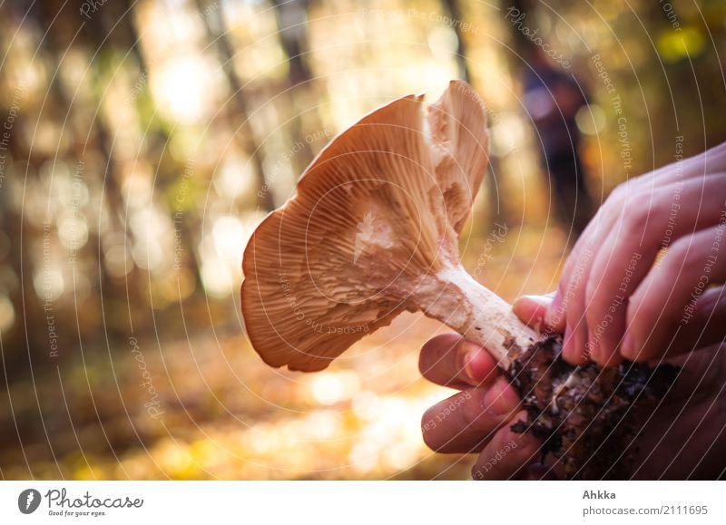 Waldreichtum Mensch Natur Hand ruhig Umwelt Herbst Lebensmittel braun Freizeit & Hobby wild Lebensfreude Vertrauen Leidenschaft Sammlung nachhaltig