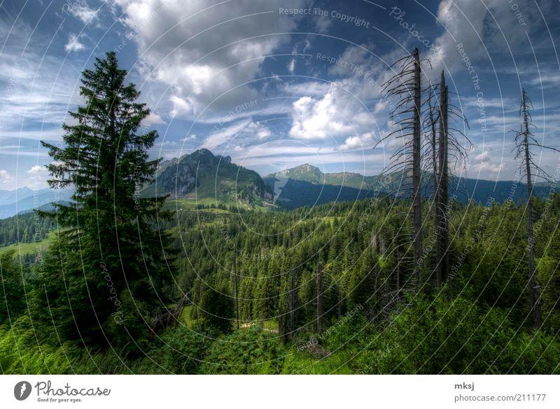 Himmel Natur Baum Pflanze Sommer Freude Wolken Wald Leben Landschaft Gefühle Berge u. Gebirge Wärme Erde Stimmung Wetter