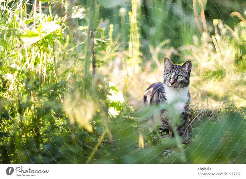 Hauskatze in der Wildnis Katze Natur Ferien & Urlaub & Reisen Pflanze Blatt Tier Wald Leben Umwelt Wiese natürlich Gras Garten Sträucher Abenteuer warten
