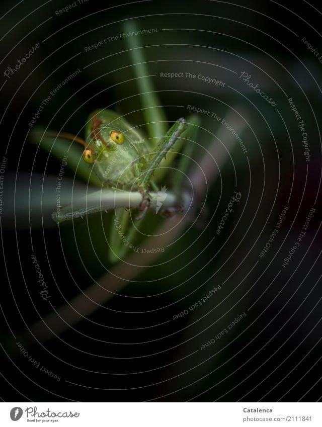 Aus der Tiefe Natur Sommer grün Tier schwarz gelb Umwelt Wiese Gras braun Design Wildtier beobachten Neugier sportlich Insekt