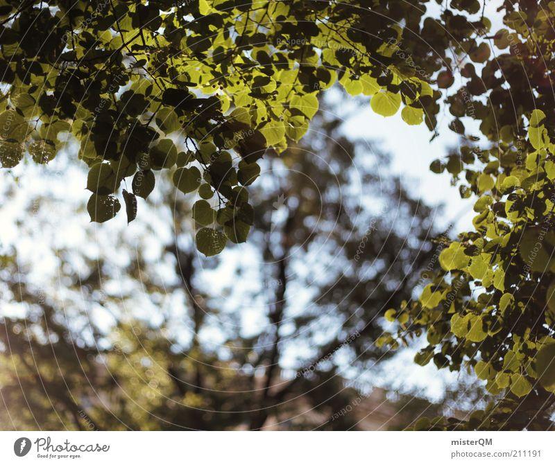 Ruhepunkt. Umwelt Natur Pflanze ästhetisch Wald Baum Blatt Wind wehen Rauschen Sommer Lichtspiel grün Park Baumkrone Laubbaum natürlich ökologisch