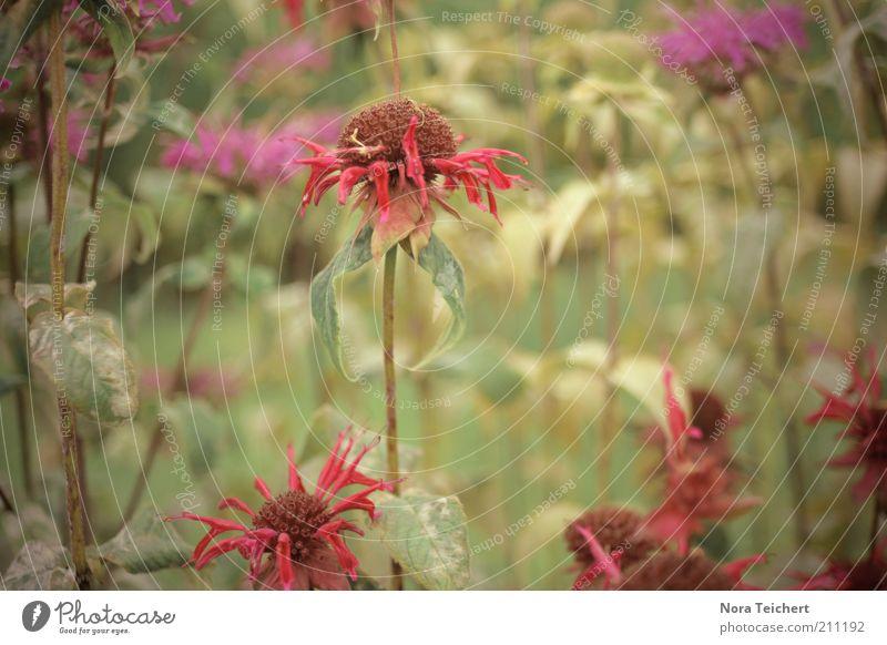 alles hat ein Ende... Natur alt Pflanze Sommer Blume Umwelt Landschaft Gefühle Blüte Traurigkeit träumen Zeit Wetter Angst natürlich ästhetisch