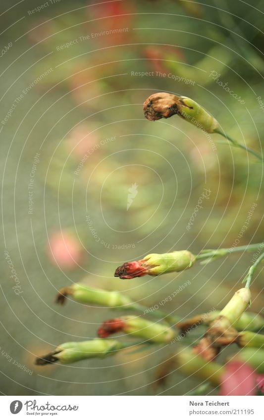 am Boden liegen Natur alt grün schön Pflanze Sommer Umwelt Tod Blüte Traurigkeit Klima geschlossen ästhetisch Sträucher Wandel & Veränderung Vergänglichkeit