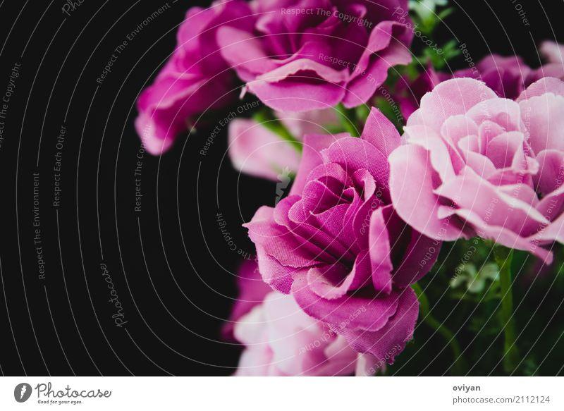 Lila Rosen Umwelt Natur Frühling Sommer Herbst Blume Tulpe Blüte Grünpflanze exotisch Garten Duft frisch Glück schön natürlich mehrfarbig grün violett