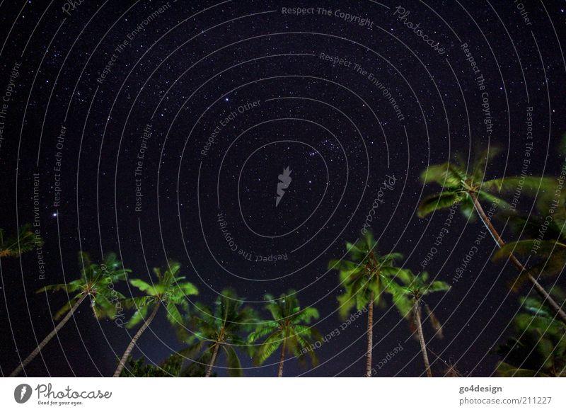 Sternenhimmel Natur Pflanze Luft Himmel Nachthimmel Sommer Schönes Wetter Wind Baum exotisch Palme Urwald Küste Strand Meer Insel Oase Malediven Asien