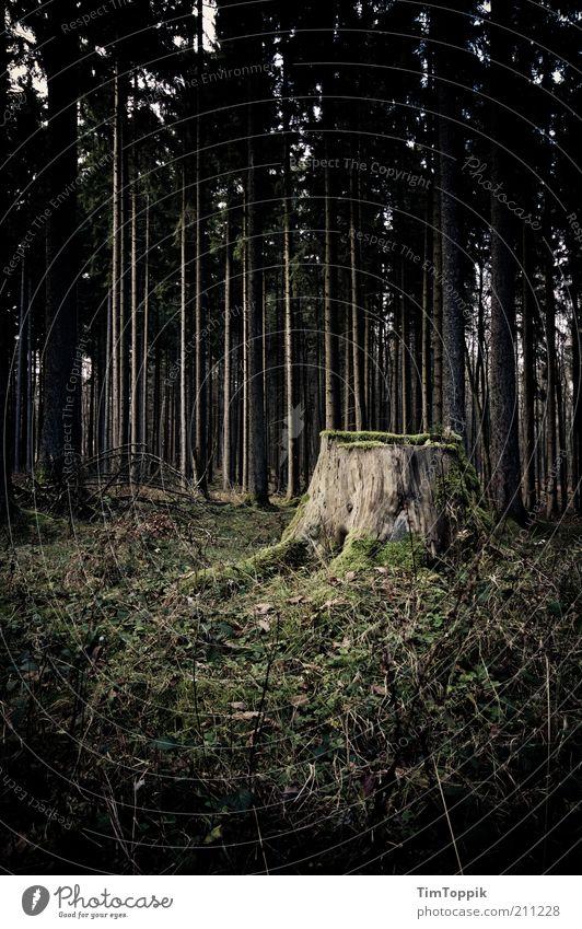 Sagaland Wald grün schwarz Waldboden Waldlichtung Waldsterben Baumstamm Baum fällen Baumstumpf mystisch geheimnisvoll dunkel unheimlich Angst Einsamkeit Seele