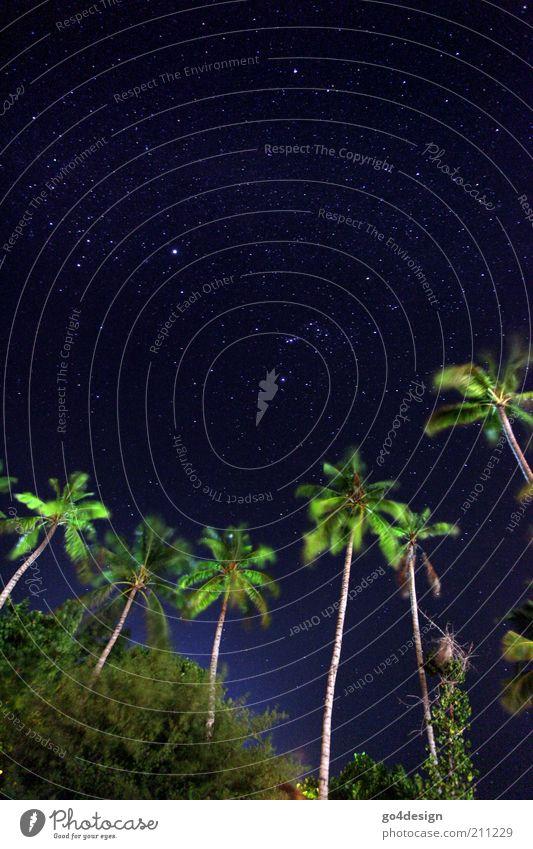 Sternenhimmel Natur Pflanze Luft Himmel Sommer Sträucher exotisch Insel Oase Menschenleer Ferne Unendlichkeit Sauberkeit blau grün schwarz Hoffnung Glaube
