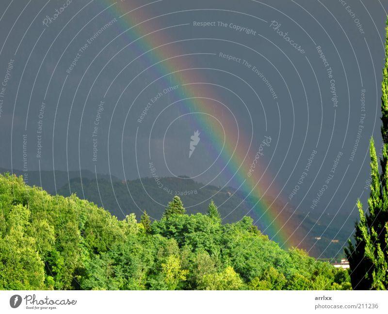 intensiver Regenbogen über dem Wald Sonne Umwelt Natur Landschaft Wassertropfen Himmel Wolken Gewitterwolken Sommer Wetter Unwetter Wind Sturm Baum Hügel