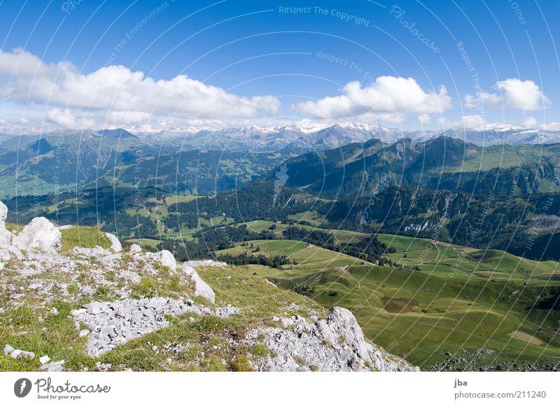 Bergwelt Tourismus Freiheit Sommer Berge u. Gebirge Natur Landschaft Horizont Schönes Wetter Felsen Alpen Gipfel Chalberhöni Gstaad Schweiz Stein Blühend