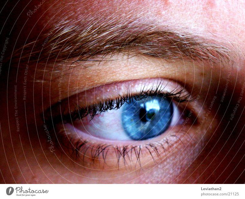Just watchin' ... Nahaufnahme Reflexion & Spiegelung Mensch Auge blau Farbe Makroaufnahme Konzentration Regenbogen Pupille Augenfarbe Wimpern Augenbraue