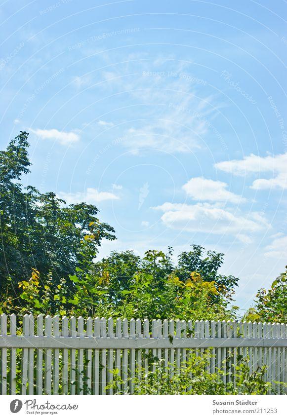 Gartenzaun Baum blau Wolken Garten hell Sträucher Zaun Schönes Wetter Blauer Himmel himmelblau Barriere Begrenzung Gartenzaun Holzzaun babyblau Grundstücksgrenze