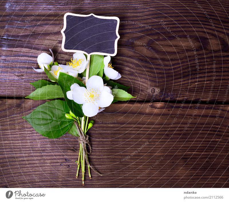 Bouquet von blühendem Jasmin Natur Pflanze Sommer Farbe schön grün weiß Blatt gelb Blüte natürlich Holz Garten oben hell frisch
