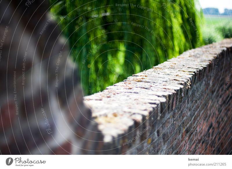 Stadtmauer Natur alt Baum grün Pflanze Sommer Wand Mauer Wärme hell Umwelt Backstein historisch Weide Schönes Wetter