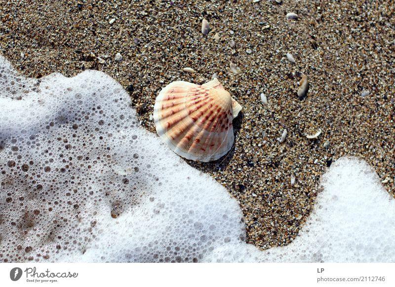 Muschel und Welle Ferien & Urlaub & Reisen Sommer Wasser Sonne Meer Erholung ruhig Freude Strand Leben Lifestyle Gefühle Tourismus Sand Design Häusliches Leben