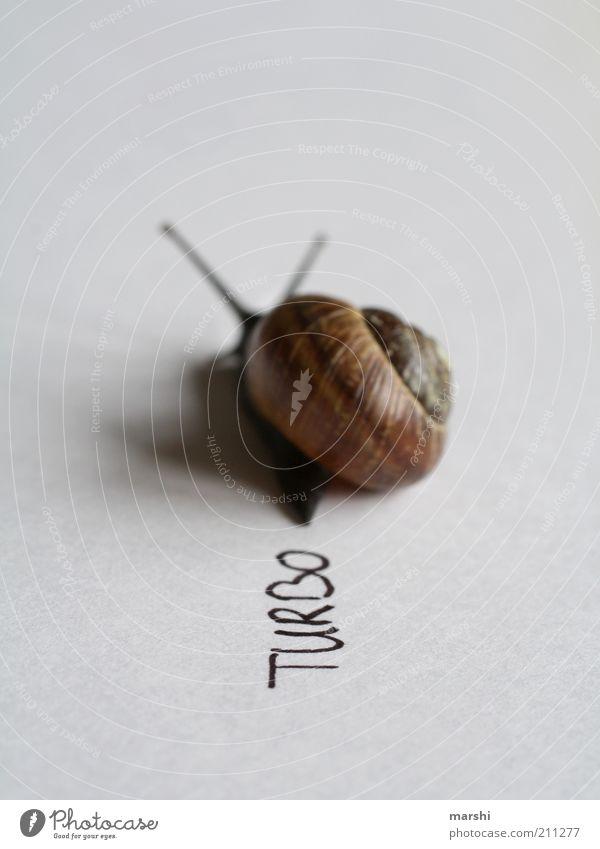 TurboSchnecke Tier 1 schleimig Geschwindigkeit Schneckenhaus klein Symbole & Metaphern langsam Innenaufnahme Menschenleer Unschärfe Schwache Tiefenschärfe