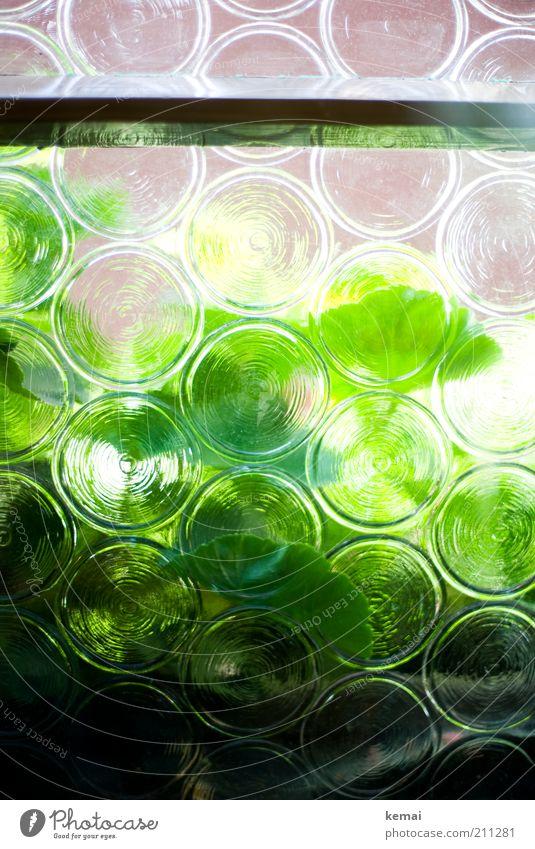 Kneipenfenster Sonne grün Pflanze Fenster Glas retro rund Fensterscheibe Grünpflanze schimmern Gebäude