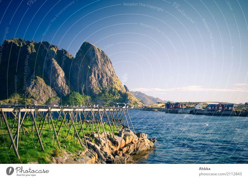 Trockenfischgerüst Ferien & Urlaub & Reisen Tourismus Sommerurlaub Sonne Umwelt Natur Landschaft Schönes Wetter Berge u. Gebirge Küste Fjord Meer Reine Lofoten