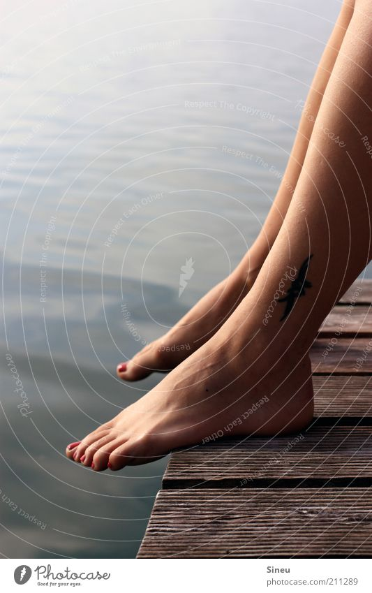 Stelzen Wasser schön Sommer Ferien & Urlaub & Reisen Erholung Beine See warten sitzen Schwimmen & Baden Tourismus Steg Tattoo Schönes Wetter Seite Sonnenbad