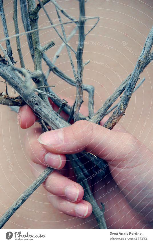 verzweigt. Hand Pflanze warten Haut Finger Ast natürlich außergewöhnlich Schmerz festhalten Zweig Stachel stachelig verblüht Mensch Nackte Haut