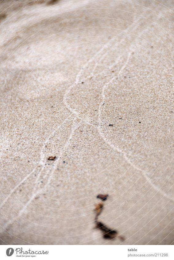 The Beach Umwelt Natur Erde Sand nass natürlich Spuren Farbfoto Gedeckte Farben Außenaufnahme Nahaufnahme Menschenleer Textfreiraum links Textfreiraum rechts