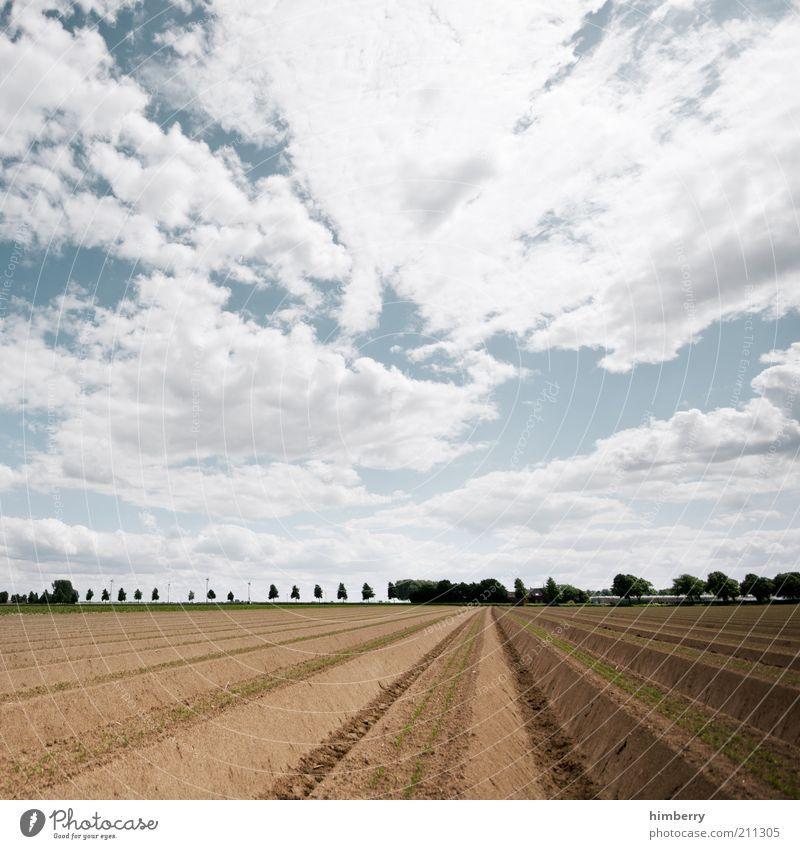sky on earth Umwelt Natur Landschaft Pflanze Erde Luft Himmel Wolken Sommer Klima Klimawandel Wetter Dürre Nutzpflanze Feld Erwartung Ernte Spargel Spargelzeit