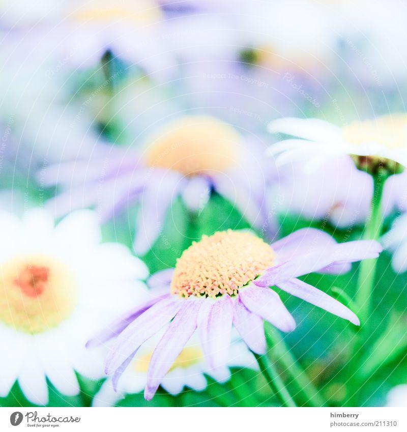 never mind Natur schön Pflanze Sommer Blume Erholung Umwelt Leben Frühling Blüte Stil natürlich ästhetisch Lifestyle Kitsch Frieden