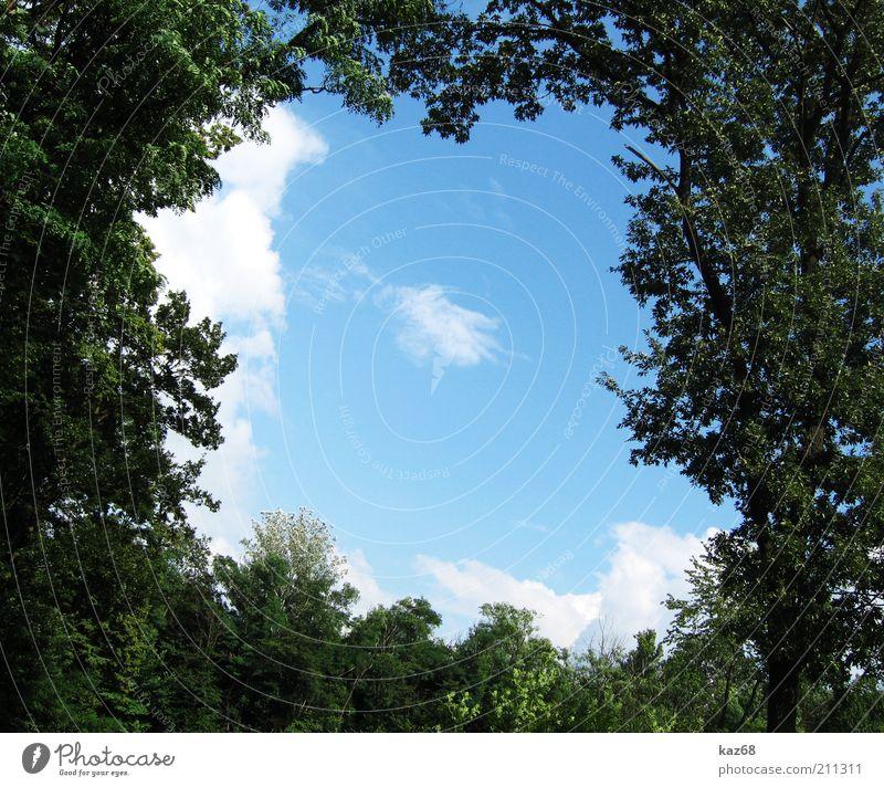 Bio Rahmen Natur Himmel Baum grün Pflanze Sommer ruhig Wolken Wald oben Holz Park Landschaft Wachstum Quadrat Urwald