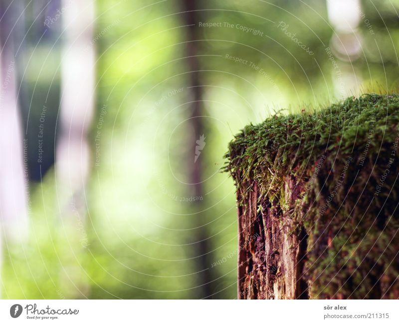 Nährboden Natur Sommer Baum Moos Wald Holz alt Wachstum nass natürlich weich braun grün verfallen verrotten Symbiose Photosynthese Moosteppich Baumstumpf