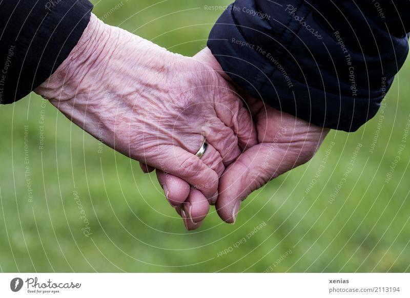 zwei Senioren halten Hände vor grünem Hintergrund Weiblicher Senior Frau Männlicher Senior Mann Großeltern Partner Haut Hand 2 Mensch 60 und älter festhalten