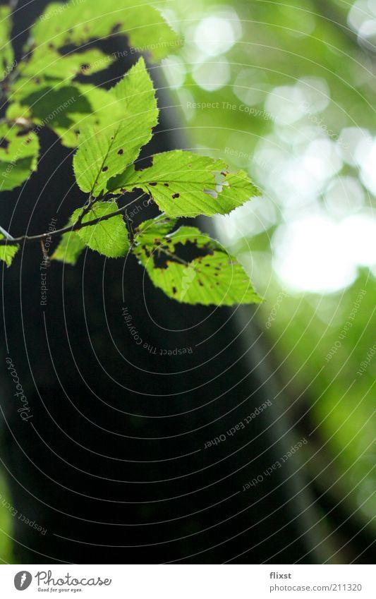 Hoffnung Natur grün Baum Sommer Blatt natürlich Zweig Blattgrün