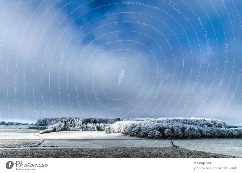 Winter Landschaft / Winter landscape Natur Pflanze blau weiß Baum Erholung Wolken Freude Ferne Wald Umwelt kalt natürlich Freiheit