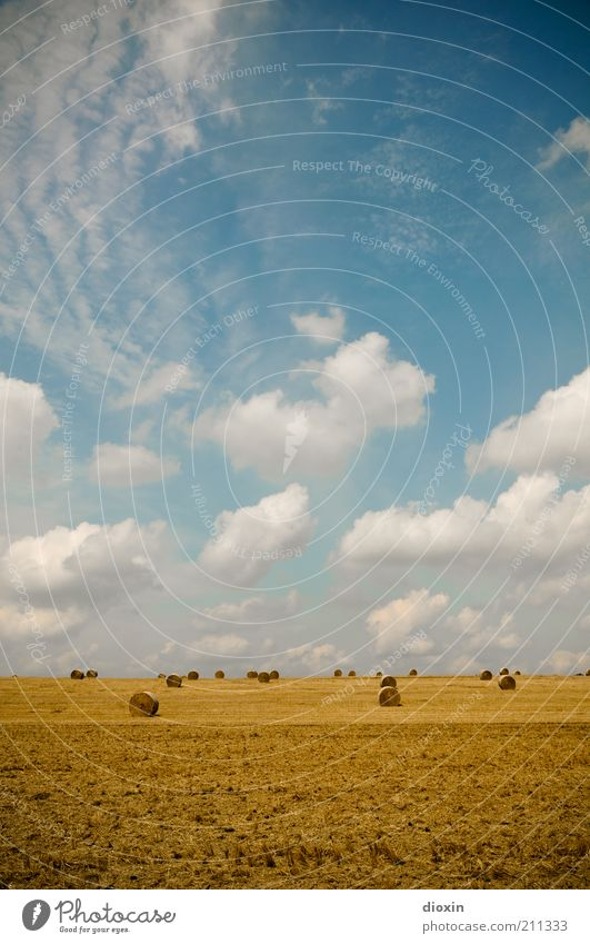 weites Feld Ackerbau Umwelt Natur Landschaft Erde Himmel Wolken Sommer Nutzpflanze Getreidefeld Getreideernte Ernte Heu Heuballen Heurolle Heuernte Heugarben